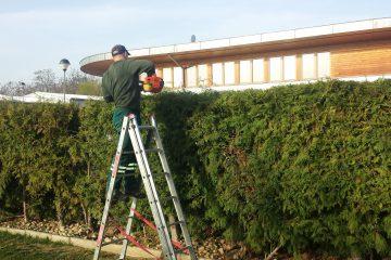 Stříhání živých plotů a dřevin