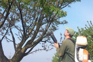 Postřiky stromů